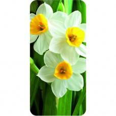 Шаблон №2039 Цветы Нарциссы
