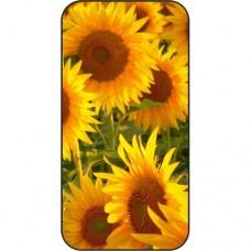 Шаблон №2279 Цветы похожие на солнце